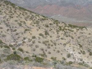 Cardiac Trail