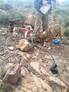 My active pups!
