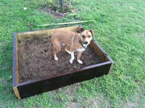 Jack and Bernie having fun in their DIY digging pit!